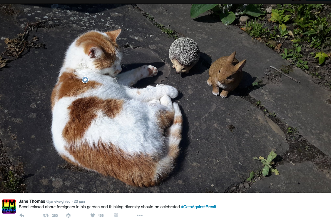 #catsagainstbrexit